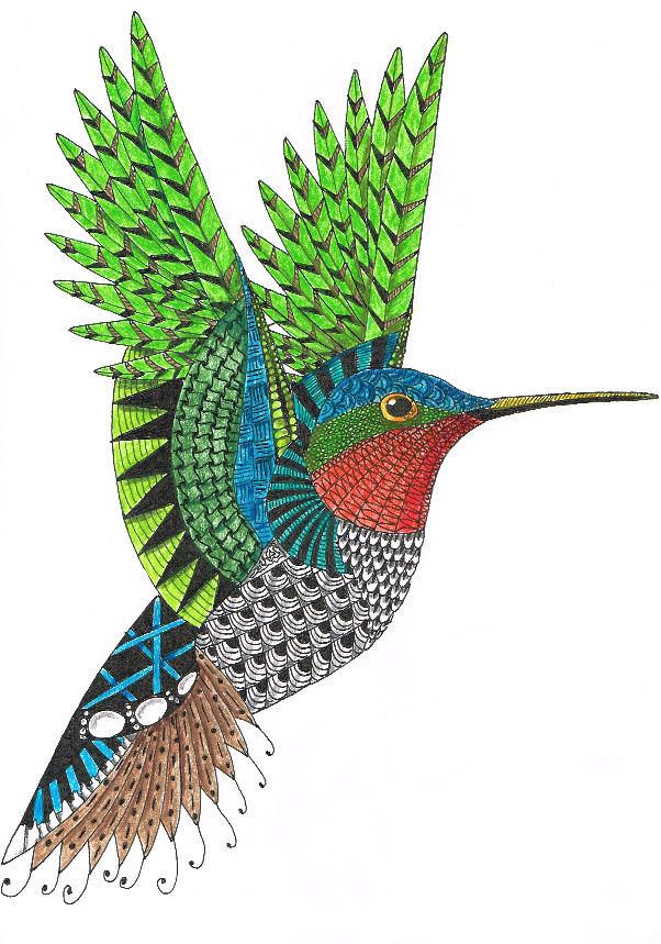 hummingbird72